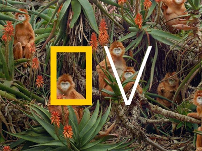 Nat Geo View chronicle national geographic product design