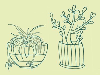 House plants for the soul