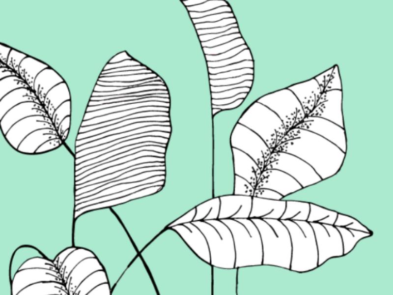 Floral prints graphic design botanical floral art design vector illustration