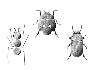 Bug Boys nature ladybug ant beetle bugs bug black and white texture photoshop illustration