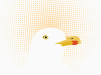 Gull Illustration