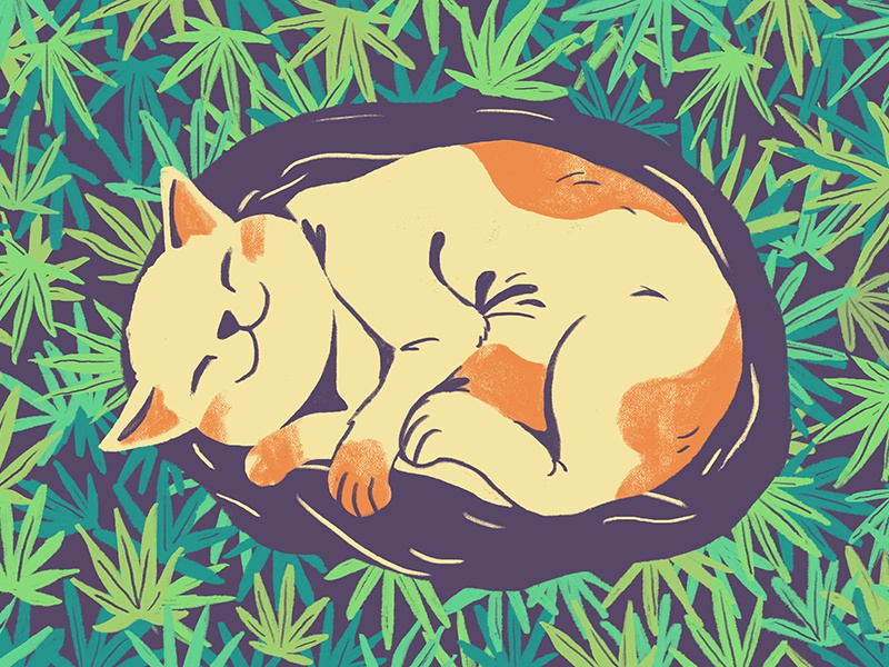Sweet Dreams editorial 2d marijuana weed illustrator design flat illustration cat