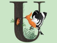 U is for Upupa Epops