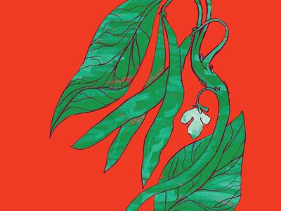 Green Beans — Seed Packet Illustration green beans garden nature earth healthy green vegetables veggies
