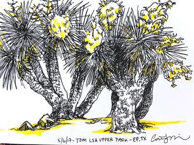 Desert Sketch urban sketch sketch yucca plants desert