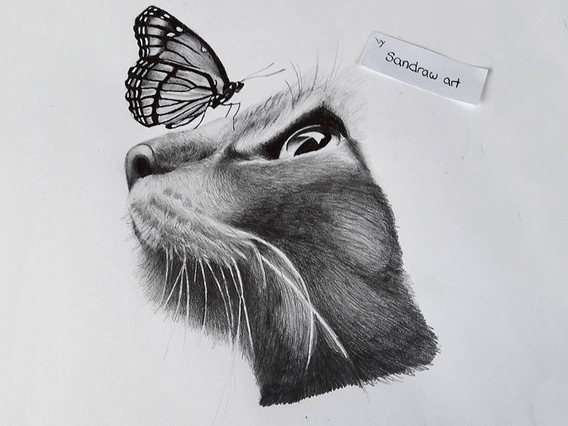Cat Meets Butterfly By Sandra Tittmann On Dribbble