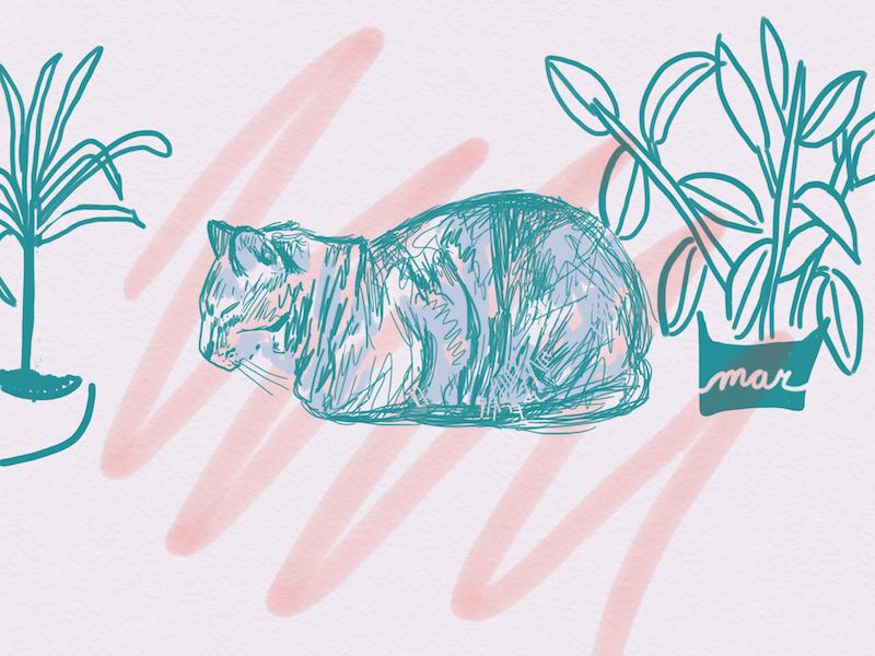 Sketching Mar plants digital minimal lines loose sketch watercolor cat