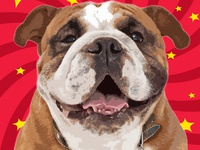 Canvas Printing Online Best Canvas Prints Dog Pop Art