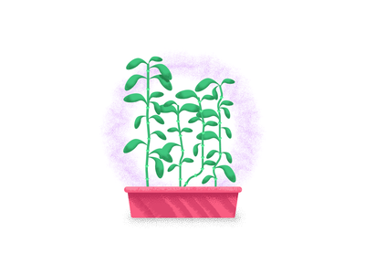 Lucky Bamboo good luck growing plant lucky bamboo grass retro minimal simple graphic design illustration