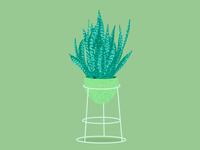 Dracaena trifasciata - Snakeplant illustration