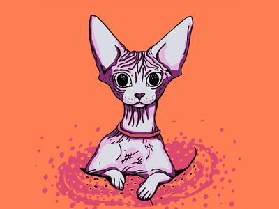 Big Eyed Sphynx Kitty