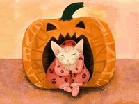 Sphynx Cat Wearing a Skull Hoodie