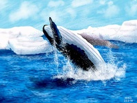 Blue Whale jumping on the sea.. :)