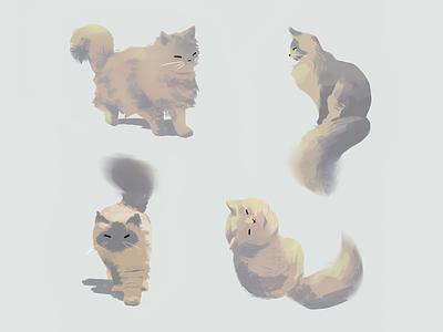 Cats cute procreate concept animal cat brush photoshop colorful illustration