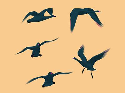 🦢🦅🦆 procreate photoshop bird illustration contrast light wings peace flying black white animal bird nature brush texture illustration