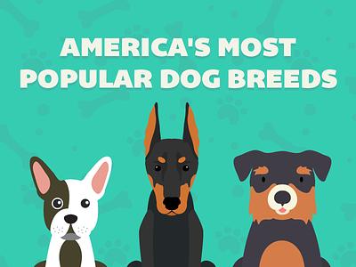 America's Most Popular Dogs. rottweiler doberman pincher bulldog america dog dogs