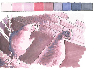 Color study on hens