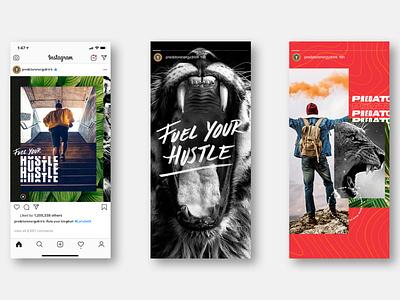 Fuel Your Hustle tropical lion animal instagram stories instagram type predator energy hustle