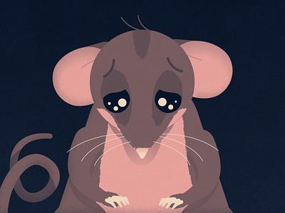 Pygmy Possum animation motion graphics design 2d illustration character