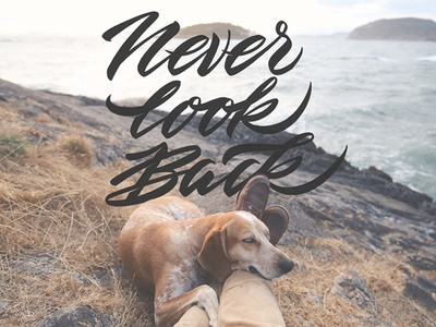 Never Look Back) brush lettering relax sea landscape vector back look never lettering dog