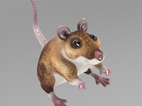 Wood Mouse Render