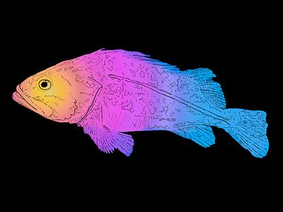 Fishy Fish poster photoshop illustration