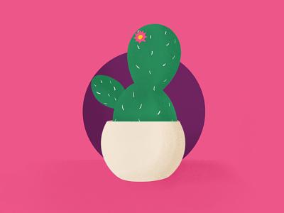 Cactus sketch succulent cactus vector icon design logo illustration