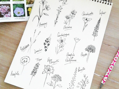 Ink wildflowes hand drawing drawing pattern ink illustration flowers