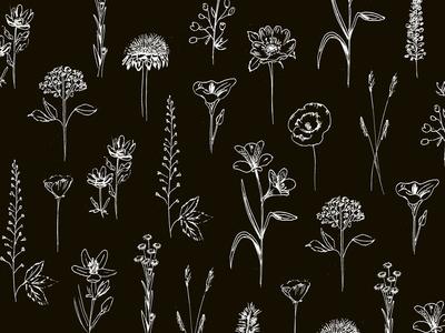 Patagonian wildflowers