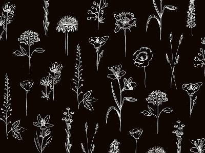 Patagonian wildflowers ink graphic design black botanic floral flowers pattern illustration