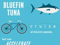 World Tuna Day Graphic
