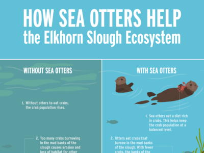 an analysis of the sea otters effects on the ecosystem Full-text paper (pdf): do trophic cascades affect the storage and flux of atmospheric carbon an analysis of sea otters and kelp forests.