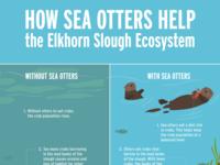 Elkhorn Slough Ecosystem Infographic