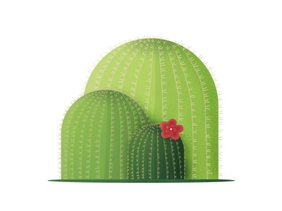 Cactuses art digital simple green flower cactus plant illustration