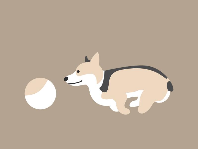 Bruno color palette color dog icon icon minimal ball chasing chase dog bruno corgi