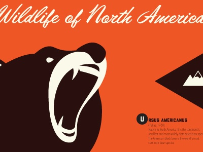 Wildlife animals nature wildlife illustration bear vector poster