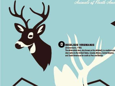 Wildlife: Deer poster wildlife animal deer illustration vector clean nature outdoors adventure infographic icon