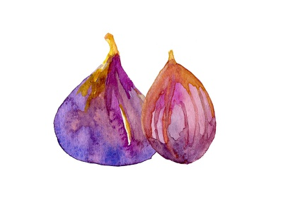 Painted figs hand painted watercolor illustration
