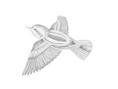 Pencil birdie meditation pencil bird hand drawn illustration