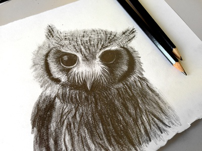 Owl drawing owl graphite
