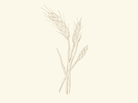 Wheat Illustration 810 Ranch and Cattle Co