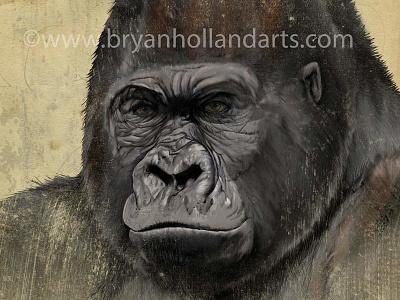 G is for gorilla corel painter adobe photoshop wacom cintiq neonmob endangered realism animal gorilla