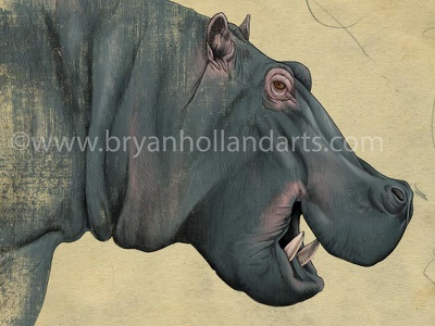 H is for hippo adobe photoshop corel painter cintiq wacom mouth tusks african animal hippo