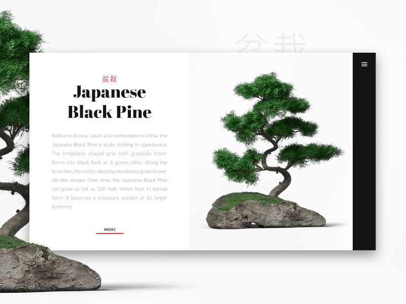Bonsai product card «samuel scalzo» typography web product card minimal clean japan daily ui bonsai