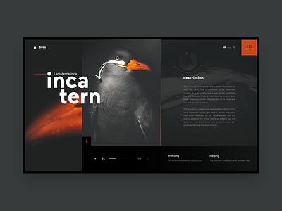 Bird UI Concept samuel scalzo interaction web dark orange ui clean bird
