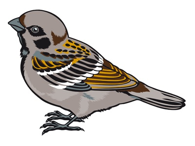 Passero ali semi zampe volo becco passero fly