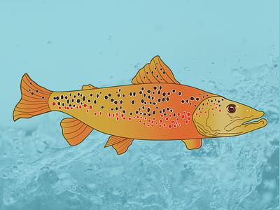 Brown Trout hogs colorado fishing digital illustration fly fishing