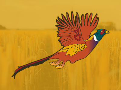 Ring-necked Pheasant laminatedvinyl diecut sticker graphic colorado pheasant illustration