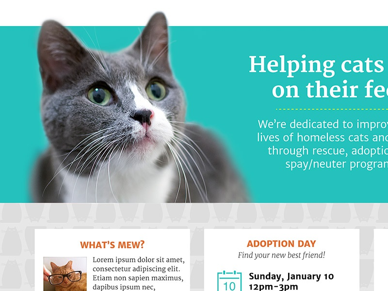 Cat Rescue website pro bono cats homepage website