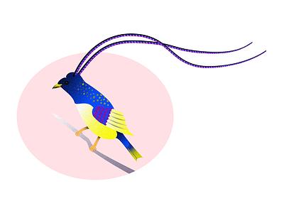 King of Saxony vibrant bird illustration gradients bird of paradise animal art animal bird illustration affinity designer